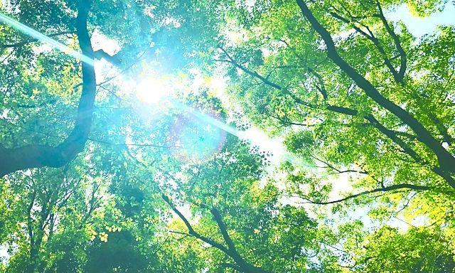 日本初!森の空中あそび「パカブ」