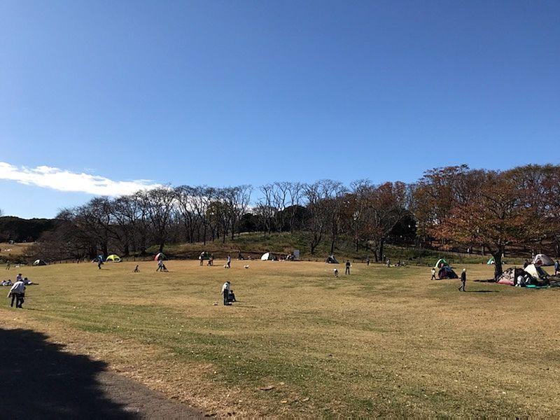 根岸森林公園の芝生広場
